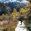 151016-135焼岳登山と上高地・黄葉の紅葉の中の散策路