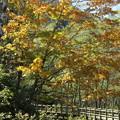 151016-150焼岳登山と上高地・黄葉の紅葉
