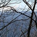 写真: 100116-38大岳山・馬頭刈尾根 樹間の富士山