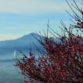 Photos: 宝登山より・・・