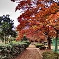 紅葉の散歩道・A