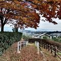 紅葉の散歩道・B