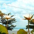 その後、椰子と睡蓮は、仲良くくらしていましyた。