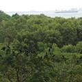 写真: カラス集団の止まり木。