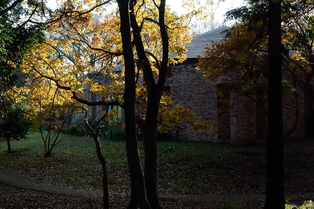 森の図書館_15z12