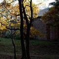 Photos: 森の図書館_15z12
