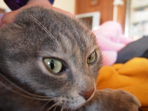 猫の額、、えっ!おでこ!