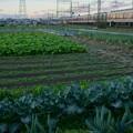 Photos: 野菜畑で