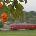 Photos: 柿と鮮魚列車