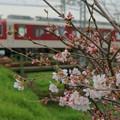 Photos: 桜と近鉄@大和川