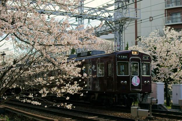 Photos: 桜と阪急電車(さくらHM)