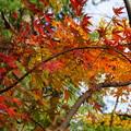 Photos: 色々な色