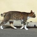 Photos: 長崎猫