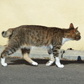 写真: 長崎猫