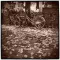 秋葉の落葉