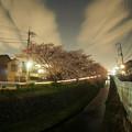 川辺の桜(E-PL5)