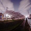 川辺の桜(E-PL5 DxO)