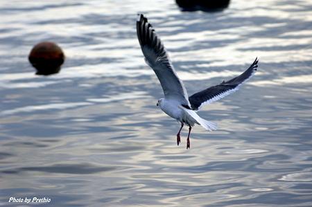 漁港にて(カモメ)