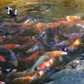 平塚八幡宮の池