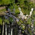 梅に竹 2