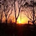 木立の中に夕日