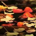 写真: 池面の落ち葉