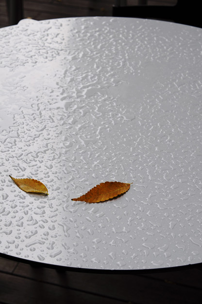 感傷の秋♪