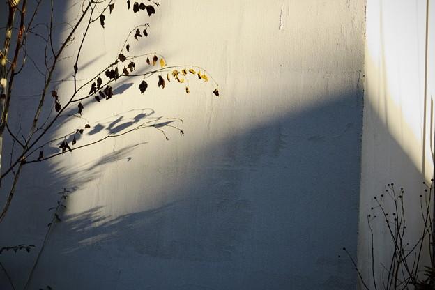 写真: 冬のかくれんぼ♪