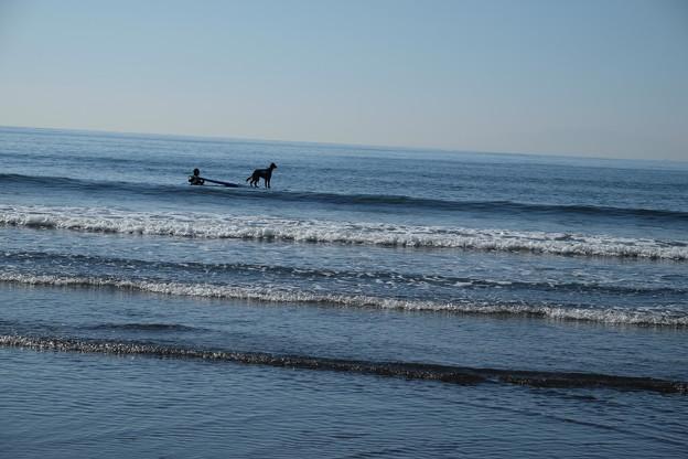 写真: 老サーファーと愛犬