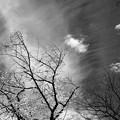 写真: 天空に桜舞う♪