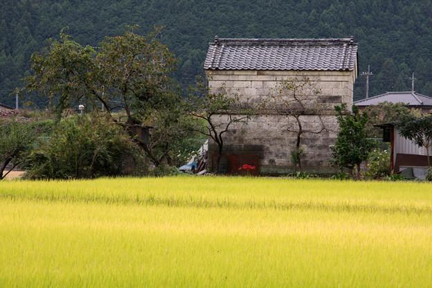 Photos: 実りの秋