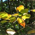 Photos: 「花見月の・・紅葉・・」・・