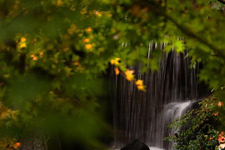 緑溢れる滝