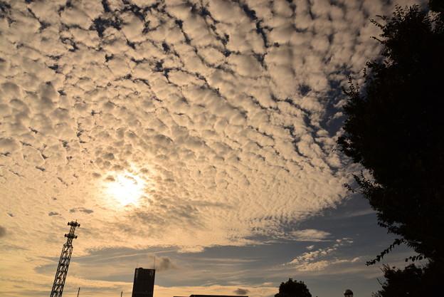 夕暮れのひつじ雲