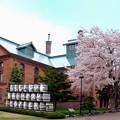 Photos: サッポロビール園の桜