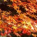 写真: 備後路の紅葉