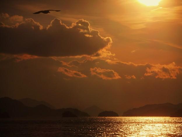 早春の カモメの居る夕景