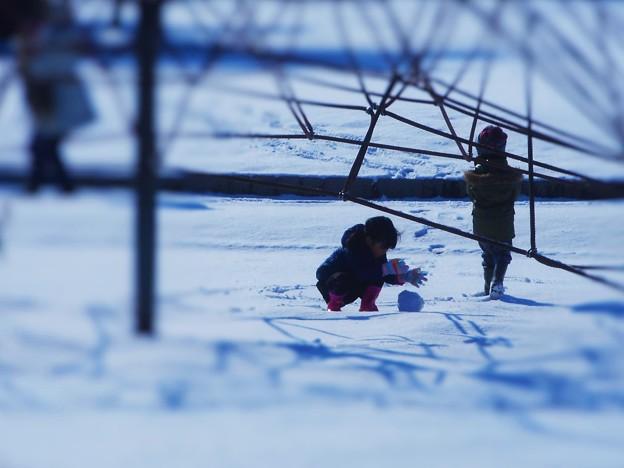 積もりました、氷点下5℃、積雪5cm。
