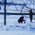 Photos: 積もりました、氷点下5℃、積雪5cm。