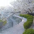 桜吹雪の 雪が降る