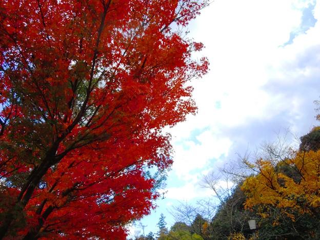 晩秋の山路