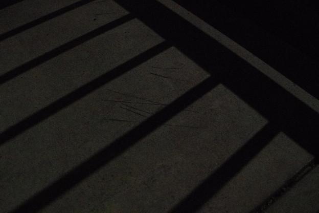 エクストラスーパームーンの月明かり
