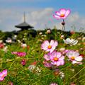 Photos: 活々花の大行進