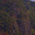 Photos: 我が山河の紅葉風景「断崖の紅葉」