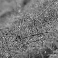 自然界のイルミネーション「モノクロ」