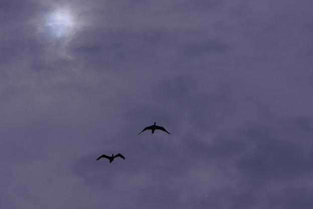 彩雲を飛ぶ