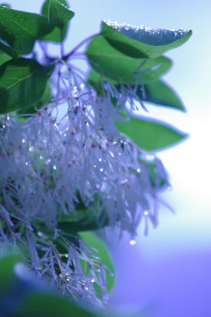 何じゃこの花
