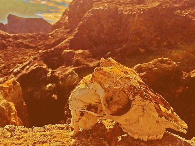 火星に生命体の痕跡発見か !?  by ぷりんちゃん
