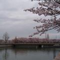Photos: 桜と池