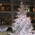 Photos: 白いツリー(2)